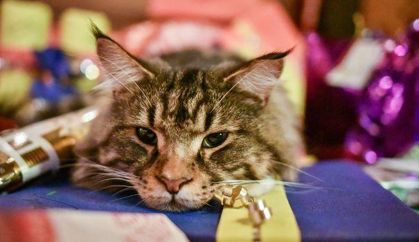 Jouets Jouets, friandises, vêtements… le joyeux Noël des animaux