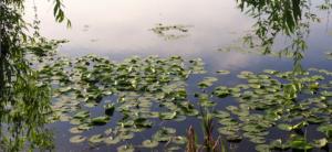 Jardin Des mares pour protéger la biodiversité