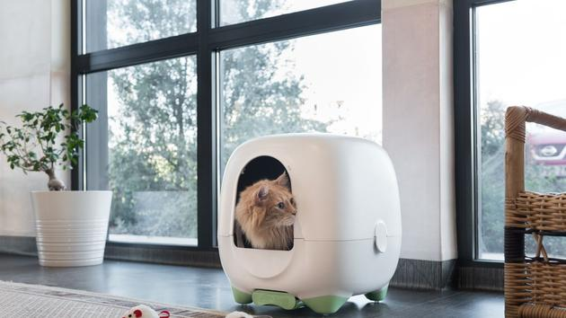 Animaux Caremitou, un vétérinaire à abode pour les chats