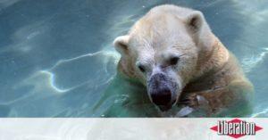 Animaux Que deviennent les dépouilles des animaux des zoos ?
