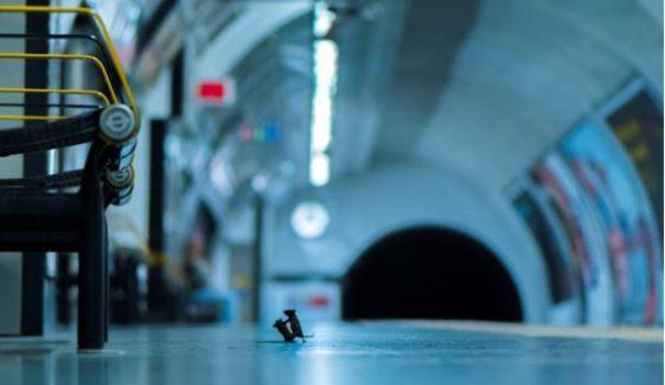 Bebe Deliver animalière de l'année : un duel de souris dans le métro reçoit le prix du public