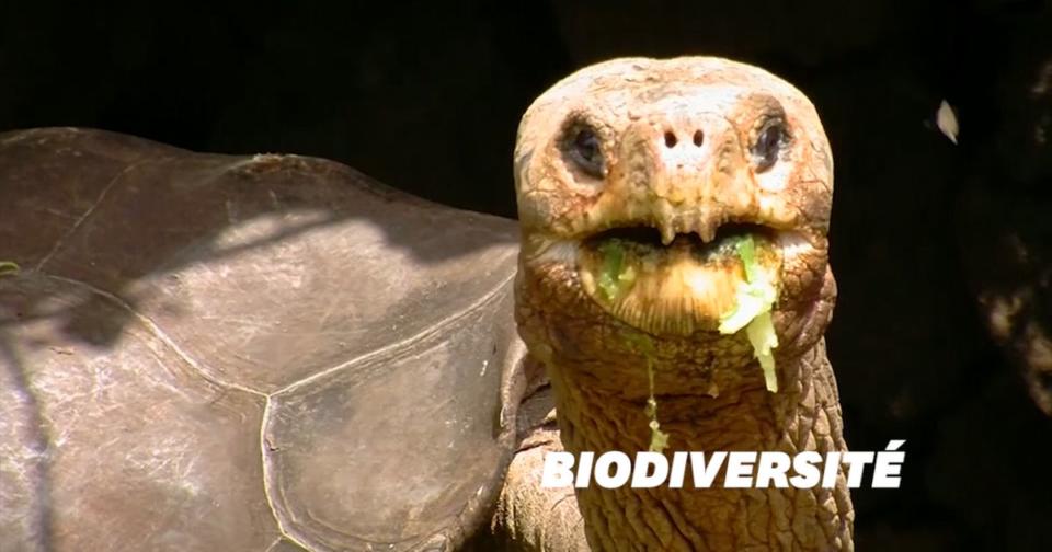 Animaux 30 tortues géantes considerations d'espèces disparues découvertes aux îles Galapagos