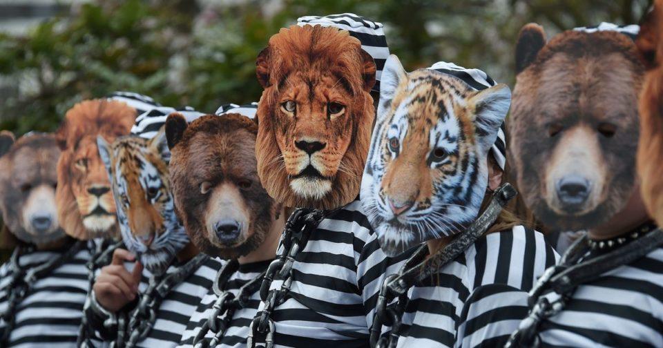 Animaux La fin des animaux sauvages dans les cirques, victoire incertaine pour leurs défenseurs