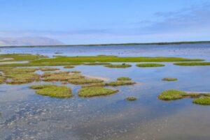 Maillot de bain Conoce ocho razones primordiales para conservar los humedales del Perú