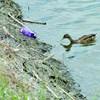 Maillot de bain Criança de 3 anos morre ao cair em lago enquanto alimentava patos