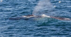 Maillot de bain Secret Spoiled Critiques: Blue Whales