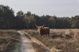 Maillot de bain Ethereum [ETH] Eyes $2K As Bulls Started Taking Refuge In Its Market