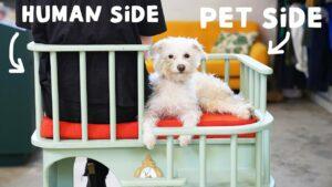 Maillot de bain Simone Giertz designed a chair for needy pets
