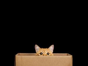 Maillot de bain Amazon's Contemporary Quantum Computer Invent Depends On Dinky Schrödinger's Cats