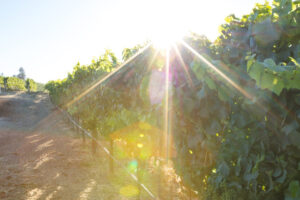Maillot de bain Domaine Carneros' Celebrates Sustainability Highlights for Earth Day 2021