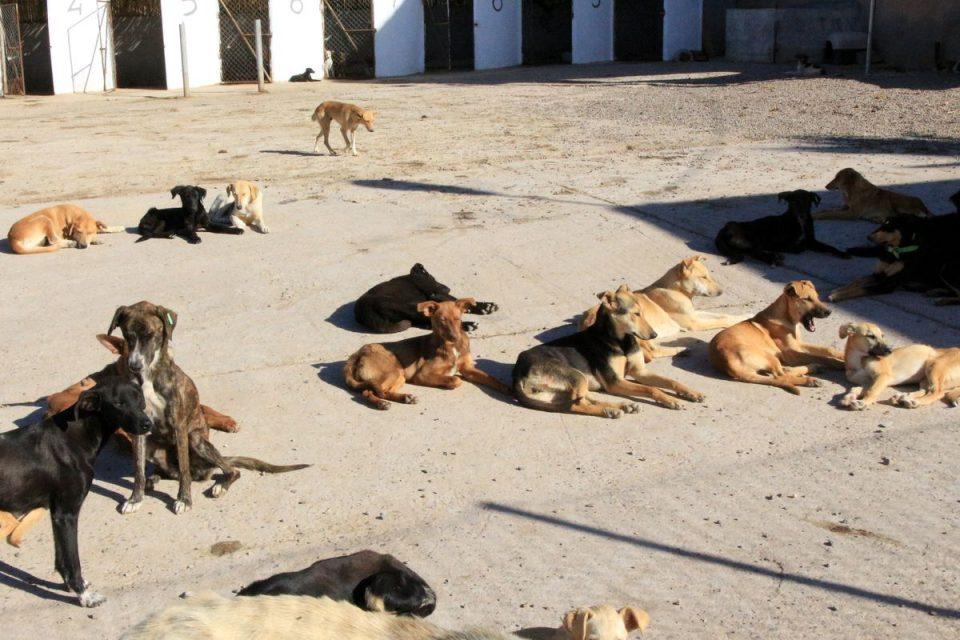 Maillot de bain À Dakhla, 118 opérations d'abattage de chiens errants seront menées, une pratique interdite