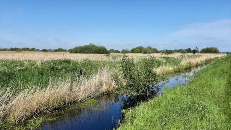Maillot de bain Zeldzame boomkikkers steken de kop op in Groningen