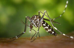 Maillot de bain Ribeirão Preto registra redução de 94,3% nos casos de dengue em relação a maio carry out ano anterior