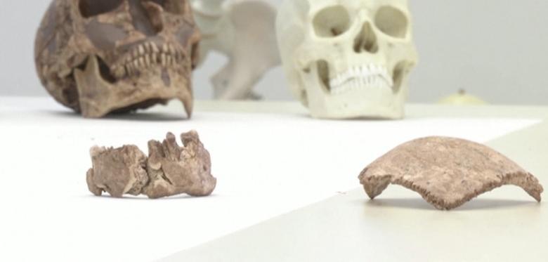 Maillot de bain Unbekannter Urmensch lässt Forscher an Neandertaler-Theorie zweifeln