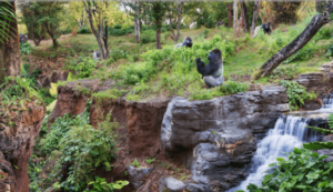 Maillot de bain Gorilas de Disney World se vuelven virales después que serpiente entrara en su recinto