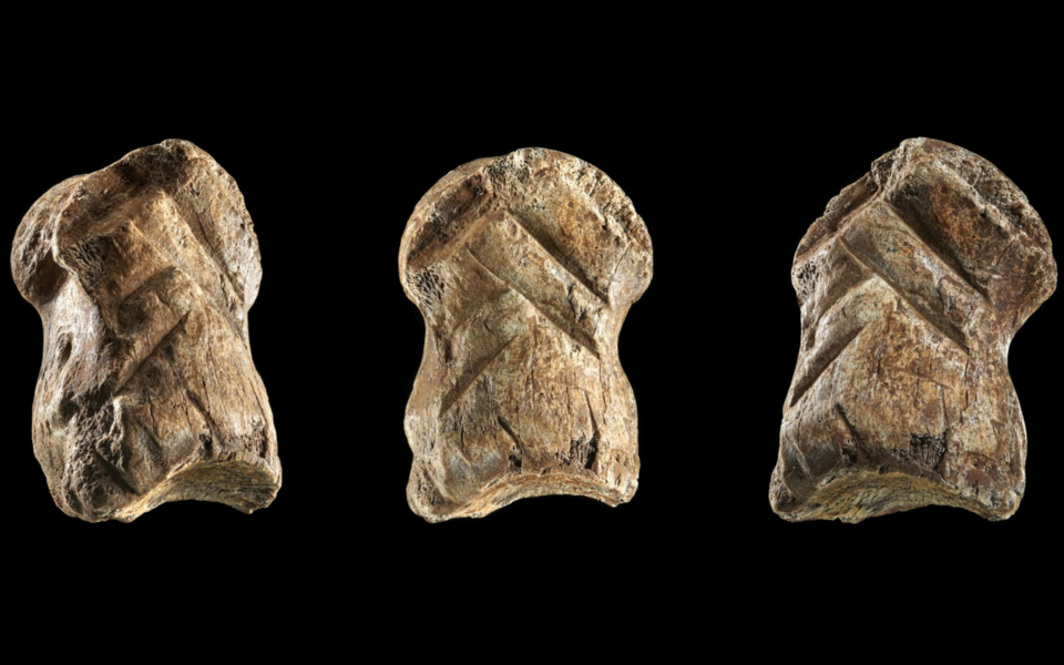 Maillot de bain Neanderthals Engraved This Aged Big Deer Bone Stumbled on In 'Unicorn Cave'