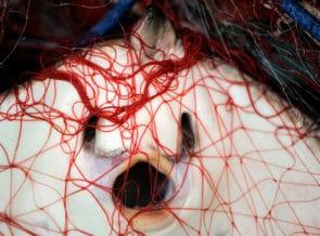 Maillot de bain Novel Narrative Finds US$2.6 Billion World Shark, Ray Meat Exchange