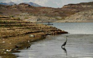 Maillot de bain Vai miljoni paliks bez ūdens? Satraucošos tempos izžūst lielākais ASV rezervuārs