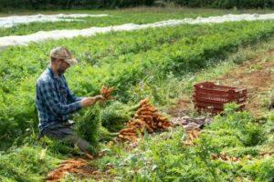 Maillot de bain Tour of this Oxfordshire farm to designate organic meals