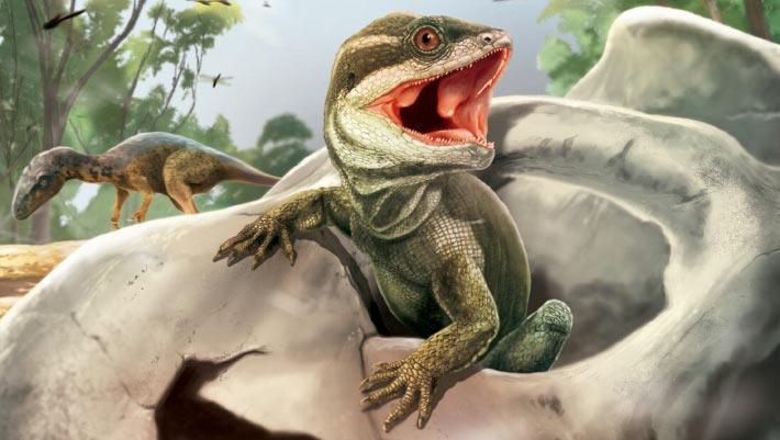 Maillot de bain Paleontologists Accumulate 231-Million-one year-Used Fossil of Tuatara-Love Reptile