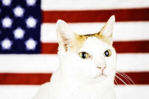 Maillot de bain アメフト会場を一つにした「宙ぶらりん猫」救出劇 星条旗がクッションに