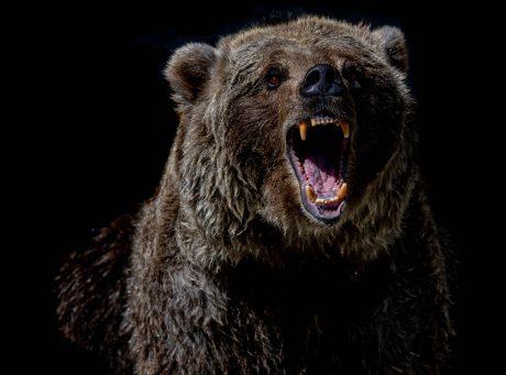 Maillot de bain Bitcoin Bearish Signals Saunter Off Despite Recovery Above $44k, Needless Cat's Jump?